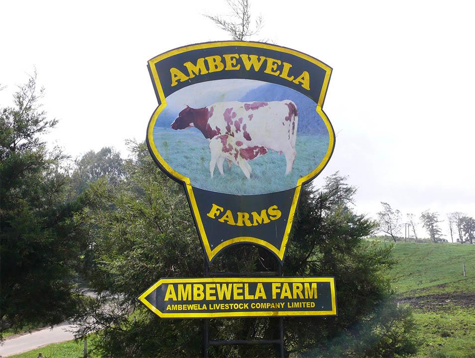 ambewela live stock